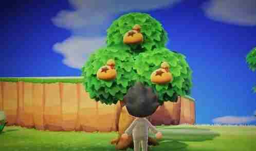 动物之森橡栗怎么得 动物之森橡栗有什么用
